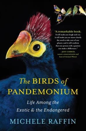 raffin_birdsofpandemonium_hc_jkt_rgb_hr-updated